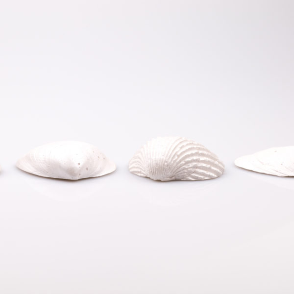 Justine Crafts   Muszle perłowe