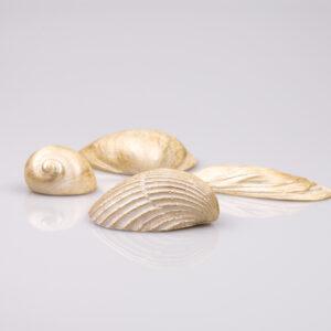 Justine Crafts | Muszle w kolorze złotym